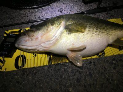 北湖東岸で釣った4キロ越えの50UP